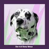 David Bow Wow