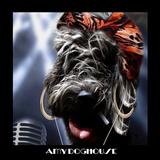 Amy Doghouse (Ipod)