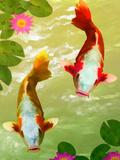 Asia Fish Koi Sea Life