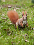 Cute Squirrel Mammal 2