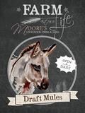 Redstreake Chalkboard Mule