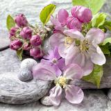 Apple Blossom - Square