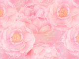 Soft Pink Rose Watercolor