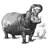 Vintage Hippo - Square