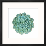 Miniature Succulent Plants Reproduction encadrée par Kenny001
