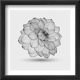 Abstract Floral Flower Dahlia Reproduction encadrée par Helga Pataki