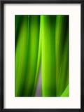Green Leaf Curtains Reproduction encadrée par Philippe Sainte-Laudy