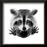Hand Drawn Raccoon Reproduction encadrée par LViktoria