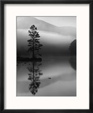 Scots Pine Tree Reflected in Lake at Dawn, Loch an Eilean, Scotland, UK Reproduction encadrée par Pete Cairns