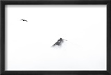 A Skua Flying in the Clouds Near a Mountain Top