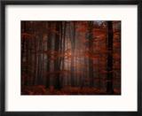 Forêt Spirituelle Reproduction encadrée par Philippe Sainte-Laudy