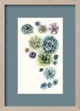 Succulent Cluster I Reproduction encadrée par Grace Popp