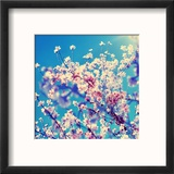 Double Exposure of Almond Trees in Full Bloom Reproduction encadrée par Nito