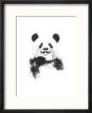 Funny Panda Reproduction encadrée par Balazs Solti