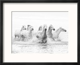 White Horses of Camargue Running Through the Water, Camargue, France Reproduction encadrée par Nadia Isakova