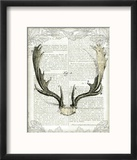 Regal Antlers on Newsprint II Reproduction encadrée par Sue Schlabach