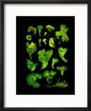 Brazilian 'Coconut Flower' Mushrooms Glow in the Dark Reproduction encadrée par David Liittschwager