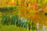 Autumn Colors in Seine River Forest  Winnipeg  Manitoba  Canada