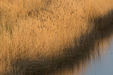Cley Marshes Norfolk Wildlife Trust Reserve Norfolk Winter