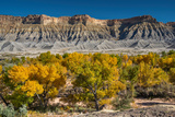 South Caineville Mesa  Cottonwood Trees  Capitol Reef National Park  Utah  USA