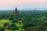 Temples and Pagodas in the Jungle at Sunrise  Bagan  Myanmar