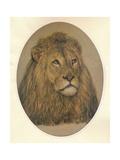 Lions Head  c1896
