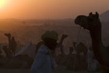 Silhouetted Dromedary Camels at Dusk at the Pushkar Camel Fair