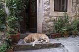 Dog Sleeping Outside the Door of the House