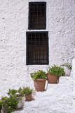 Potted Plants Line the White-Washed Stairways at the National Ethnographic Museum