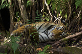 A Mother Rests with Her Two-Month-Old in Bandhavgarh National Park