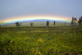 A Rainbow Arches Above the Hawaiian Landscape
