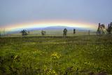 A Rainbow Arches Above the Hawaiian Landscape