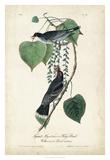 Flycatcher & King Bird