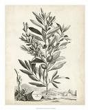 Scenic Botanical VI
