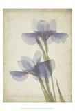 Parchment Flowers VIII