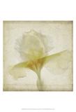 Parchment Flowers IX
