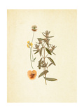 French Herbarium 3