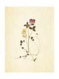 French Herbarium 1