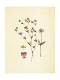 French Herbarium 2