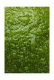 Lime Skin