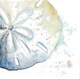 Water Sand Dollar Reproduction d'art par Patricia Pinto