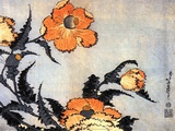 Poppies  late 1820's