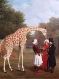 Nubian Giraffe  1827