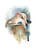 Greyhound Hope  2016