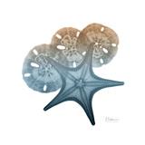 Steel Hues Starfish and Sand Dollar