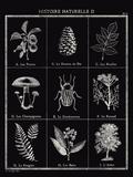 Histoire Naturelle II