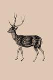 Woodland - Deer