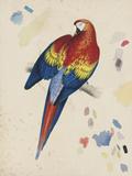 Sketchbook Macaw II