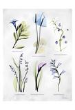 Vast Botanicals