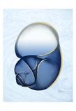 Marble Indigo Snail 1
